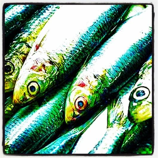 sardinha 2