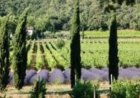 Coteaux Aix-en-Provence