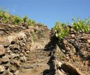 Em escarpas bastante íngrimes dos Perineus franceses, vinhedos muito antigos rendem um fortificado tinto muito famoso pela qualidade, o Banyuls