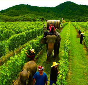Hua_Hin_Hills_Vineyard_elephant_ride